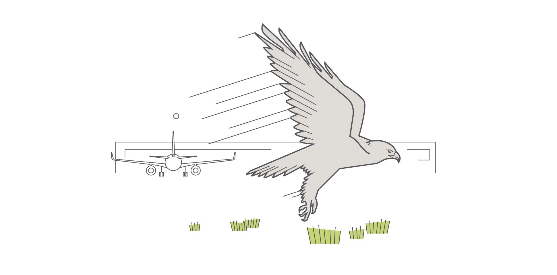 airport-bremen umweltbericht flugzeug adler 2012 polarwerk